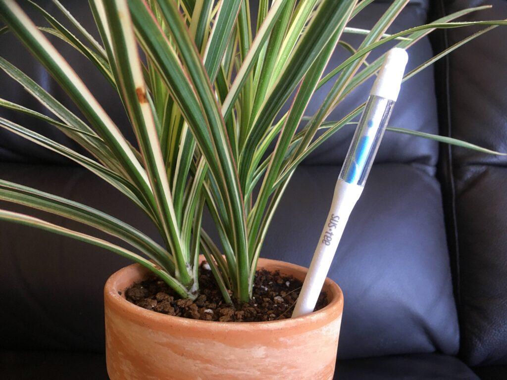 サスティーを挿した鉢植え