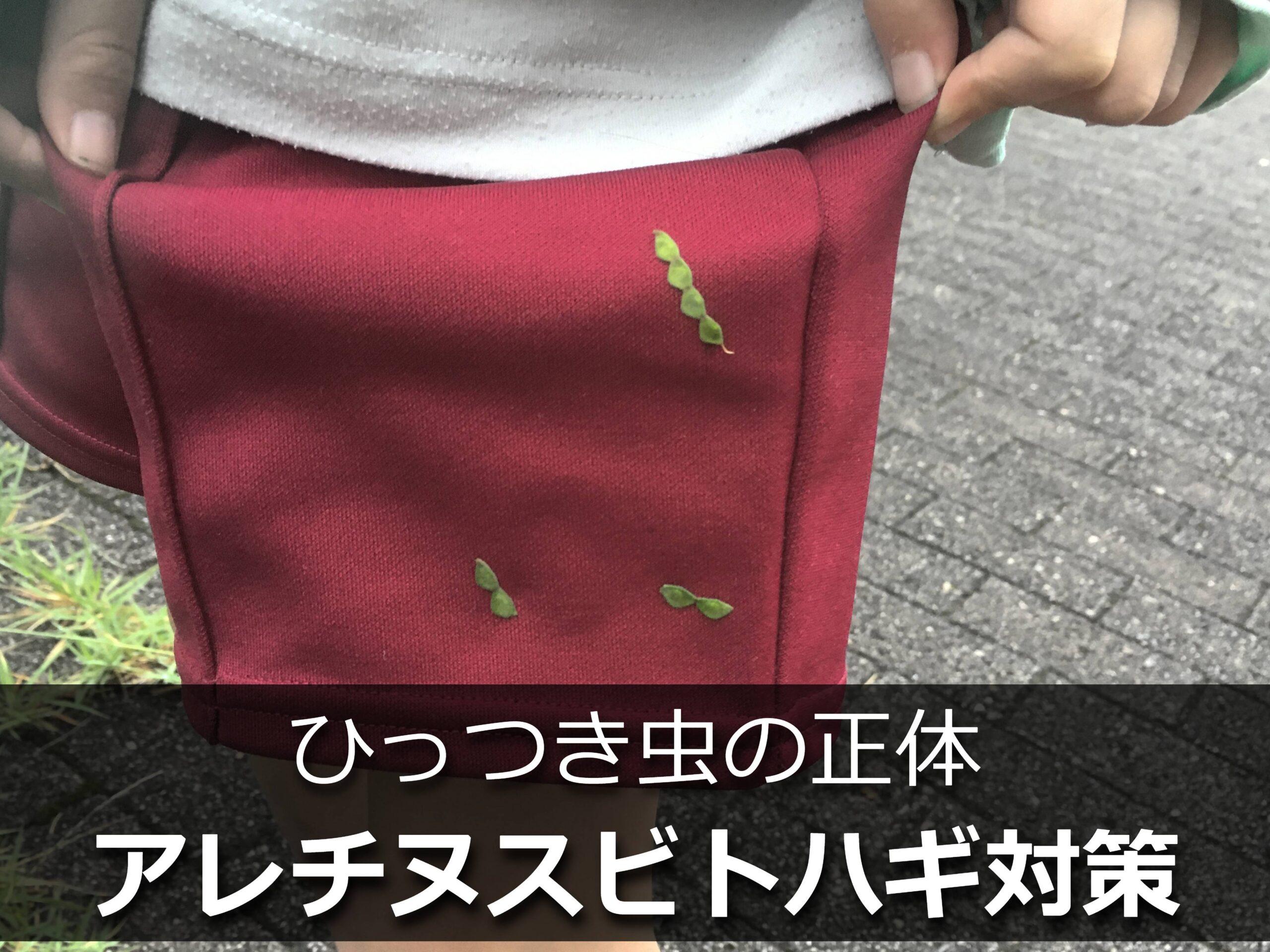 ズボンについたひっつき虫(アレチヌスビトハギの種子)