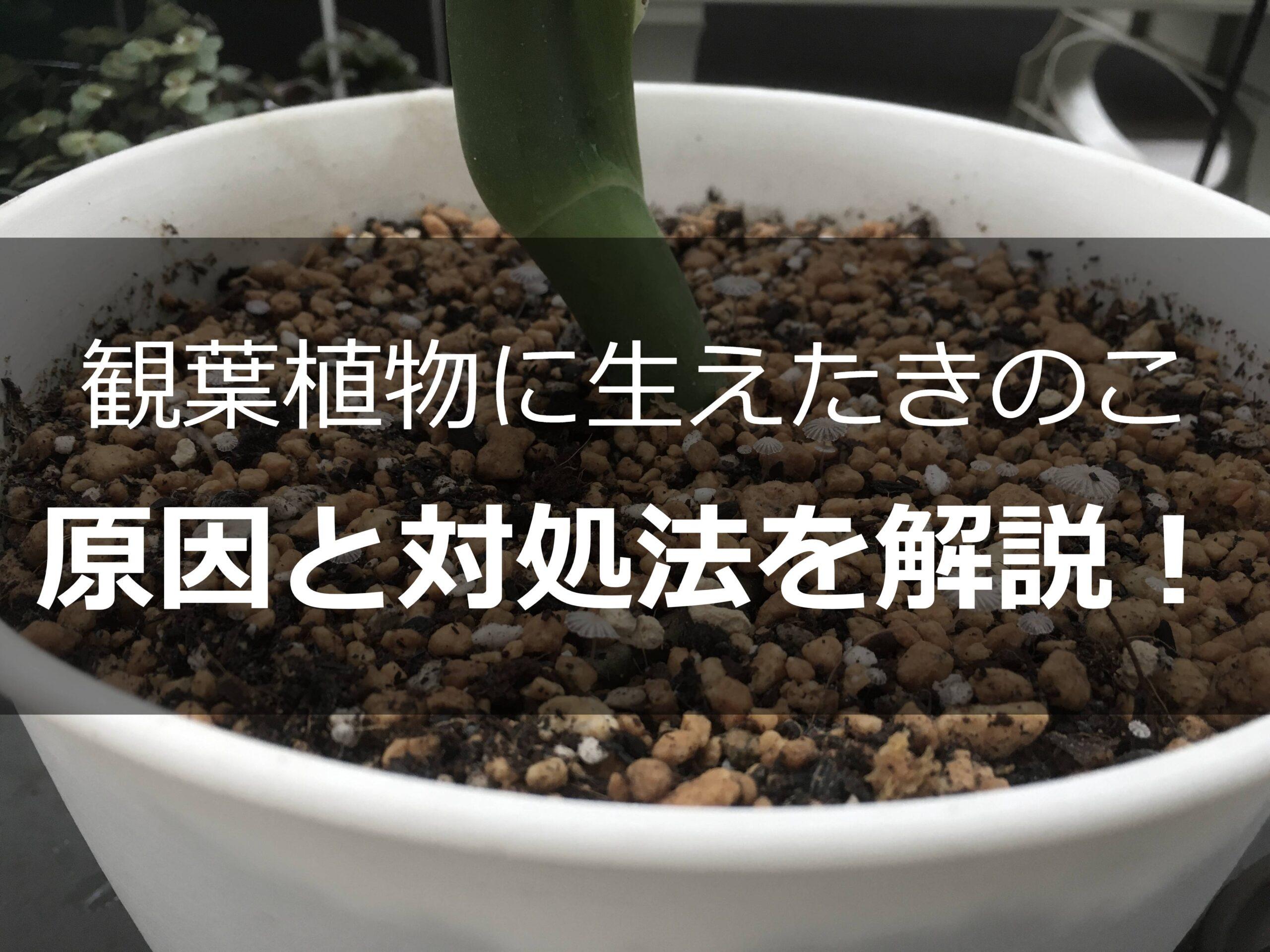 観葉植物のきのこ